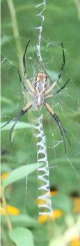 spider1-1